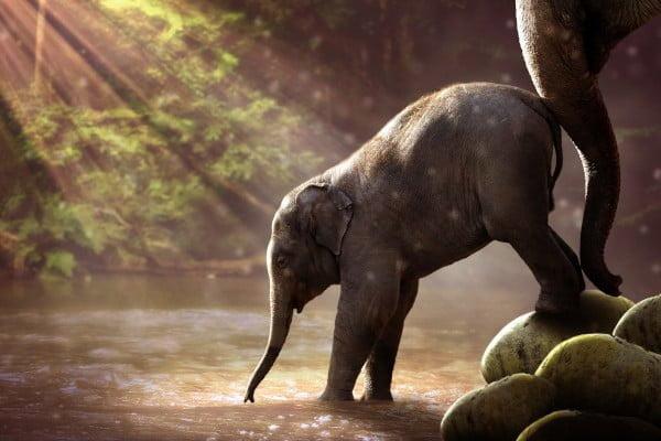 Elefante adulto que anima al elefante más joven a avanzar. Objetivos de la terapia familiar